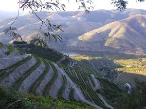 Oporto Landscape